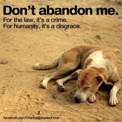 Don't abandon pets